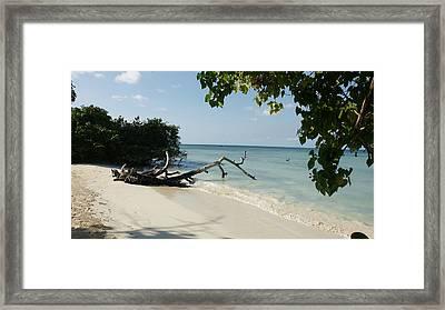 Coral Beach Framed Print by Olaf Christian