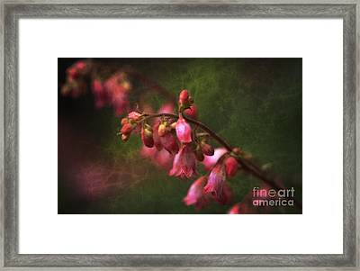 Coral Bells Framed Print by Lee Craig
