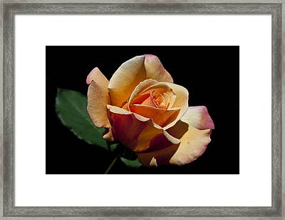 Framed Print featuring the photograph Coral Caper by Doug Norkum