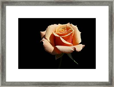 Framed Print featuring the photograph Coral Cup by Doug Norkum