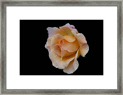 Framed Print featuring the photograph Coral Cutie by Doug Norkum