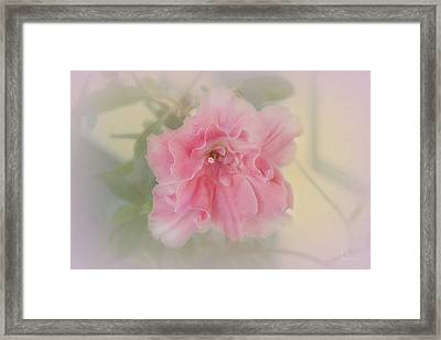 Framed Print featuring the photograph Coral by Elaine Teague