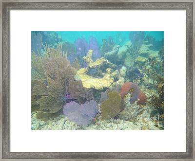 Coral Garden Framed Print by Adam Jewell