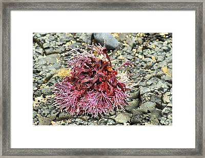 Framed Print featuring the photograph Coral I by Bob Wall
