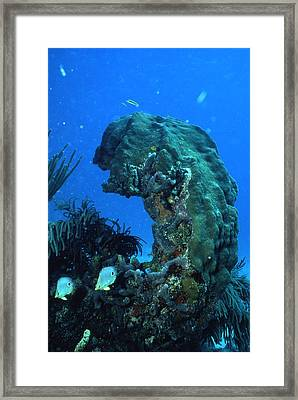 Coral In The Gulf Of Mexico Framed Print by Retro Images Archive