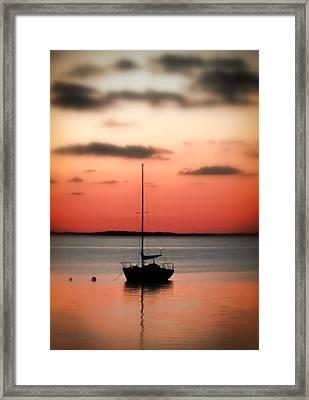 Coral Of The Keys Framed Print by Karen Wiles