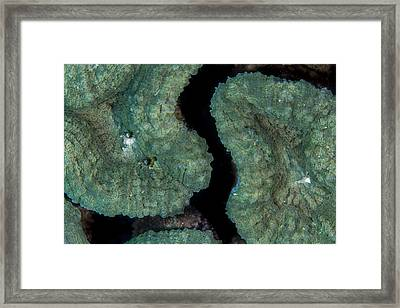 Coral Puzzle Framed Print by Jean Noren