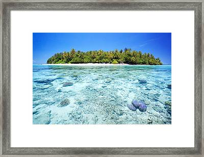 Coral Reef And Tropical Island In The Maldives Framed Print