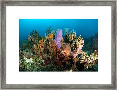 Coral Reef Framed Print by Joe Belanger
