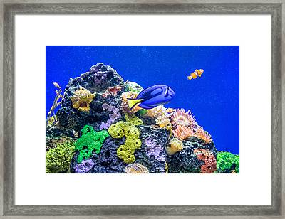 Coral Reef Framed Print by Steve Harrington