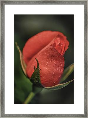 Framed Print featuring the photograph Coral Rosebud by Debbie Karnes