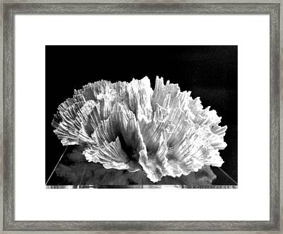 Corals 348 Framed Print by Angela Seager