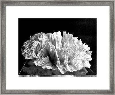 Corals 348 Framed Print