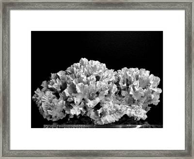 Corals 350 Framed Print by Angela Seager