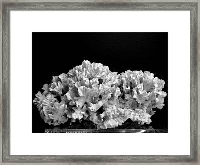 Corals 350 Framed Print