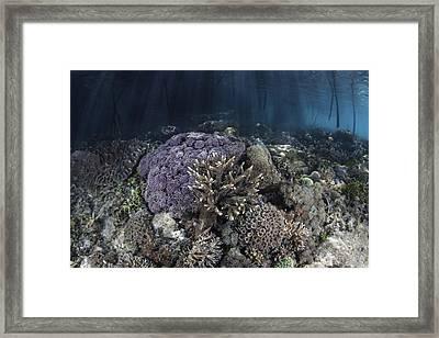 Corals Grow Along The Edge Framed Print