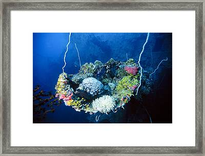 Corals On Ship Wreck Framed Print