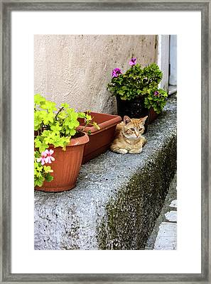 Corfu, Greece Orange Tabby Cat Lays Framed Print