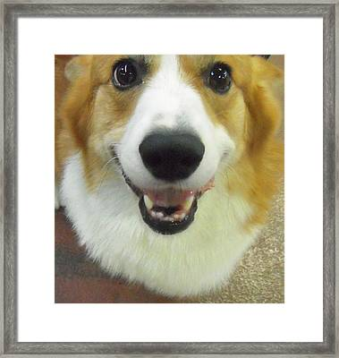 Corgi In Da House Framed Print