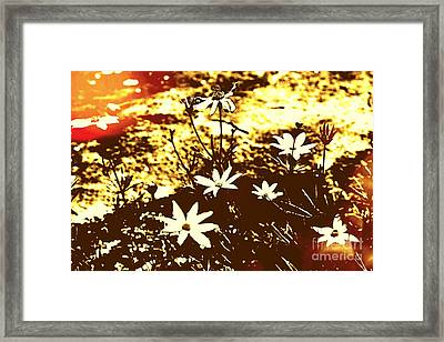 Framed Print featuring the photograph Coriopsis by Denise Tomasura