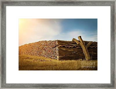 Cork Harvesting Framed Print by Carlos Caetano
