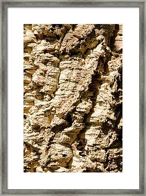 Cork Oak Bark (quercus Suber) Framed Print by Adrian Thomas