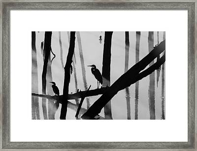 Cormorant And The Heron  Bw Framed Print