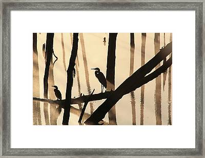Cormorant And The Heron Framed Print