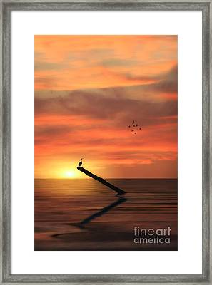 Cormorant In The Sunset Framed Print by Tom York Images