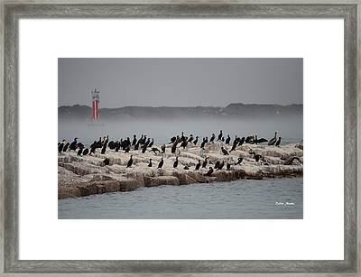 Framed Print featuring the photograph Cormorant Island by Debra Martz