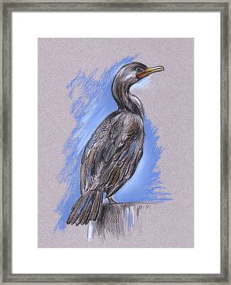 Cormorant Framed Print by MM Anderson