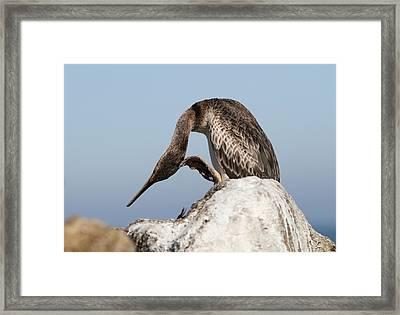 Cormorant On A Rock Framed Print