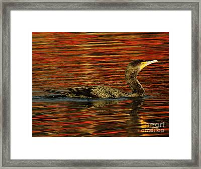Cormorant On Autumn Red Framed Print