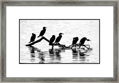 Framed Print featuring the photograph Cormorant Silhouettes by Geraldine Alexander