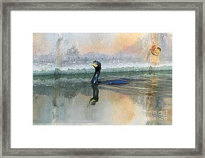 Cormorant Swim Framed Print