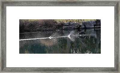 Cormorant Take-off Framed Print