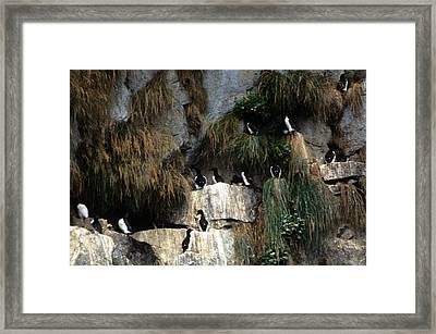 Cormorants - Alaska  Framed Print by Harold E McCray