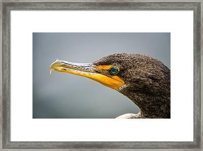 Cormorant's Jewel Framed Print