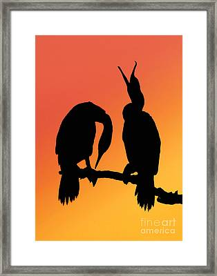 Cormorants Framed Print by Novastock