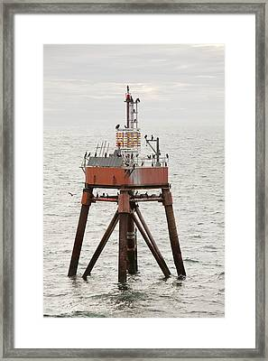 Cormorants On A Channel Light Framed Print by Ashley Cooper