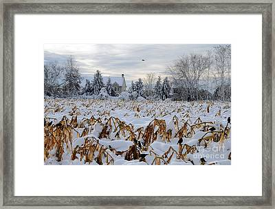 Corn And Crows Framed Print