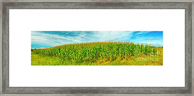 Corn Crop Framed Print by MotHaiBaPhoto Prints