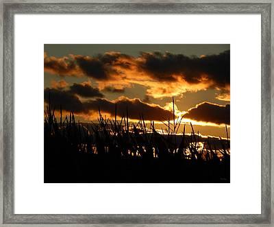 Corn En Fuego Framed Print by Wild Thing