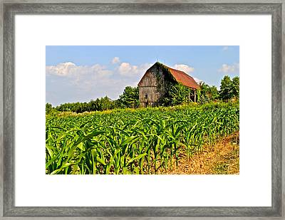 Corn Farm Framed Print by Frozen in Time Fine Art Photography