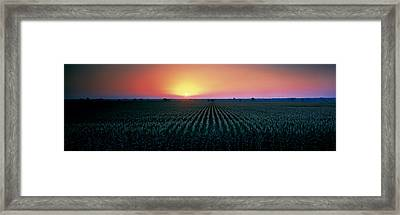 Corn Field At Sunrise Sacramento Co Ca Framed Print by Panoramic Images