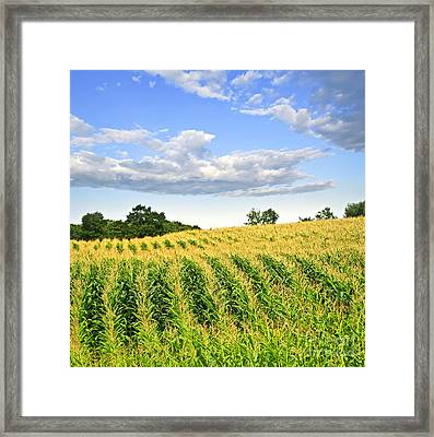 Corn Field Framed Print by Elena Elisseeva