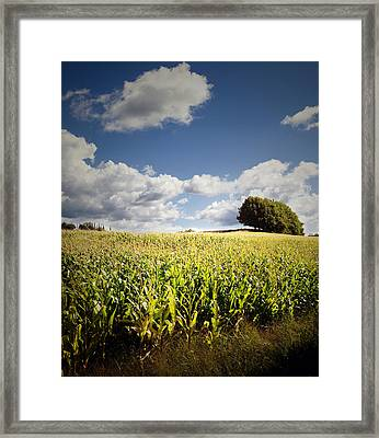 Corn Field Framed Print by Les Cunliffe