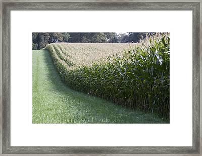Corn Fields At High Farm Estate In Arnhem Netherlands Framed Print by Ronald Jansen