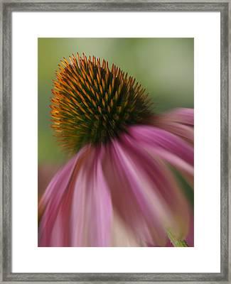The Garden Corn Flower Framed Print by Mike McGlothlen