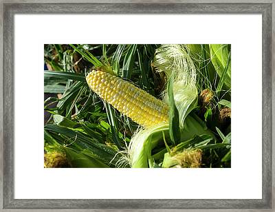 Corn For Sale At A Farmers Market Framed Print by Julien Mcroberts